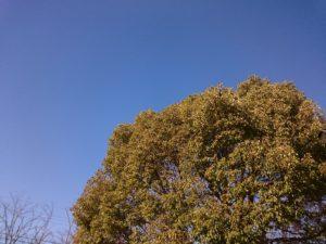 和田公園の大きな木